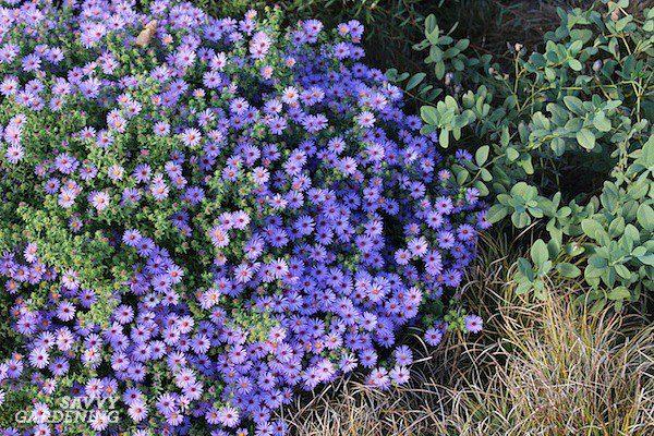 Багаторічні рослини для присадибної ділянки