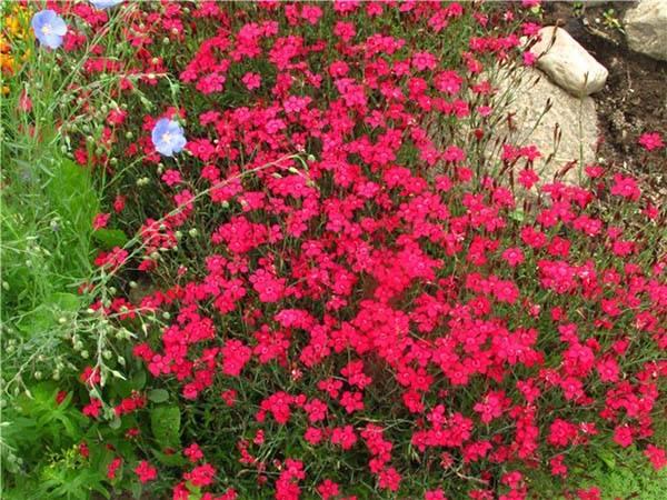 Багатолітні квіти