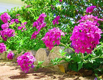 Висівання квітів на розсаду березень і квітень 2021 і подальша висадка на клумби