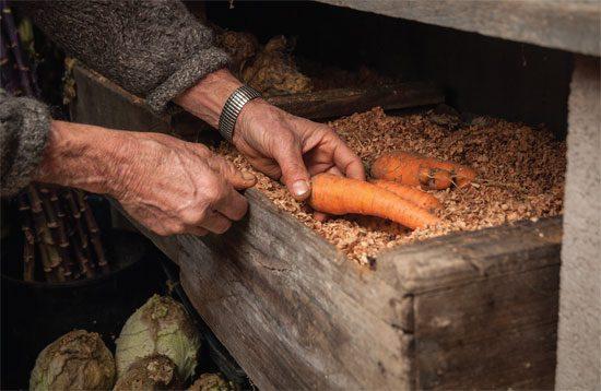 Зберігання врожаю моркви взимку