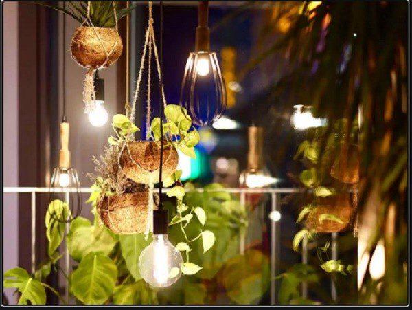 Місячний календар кімнатних рослин на листопад 2020: поради на кожний день