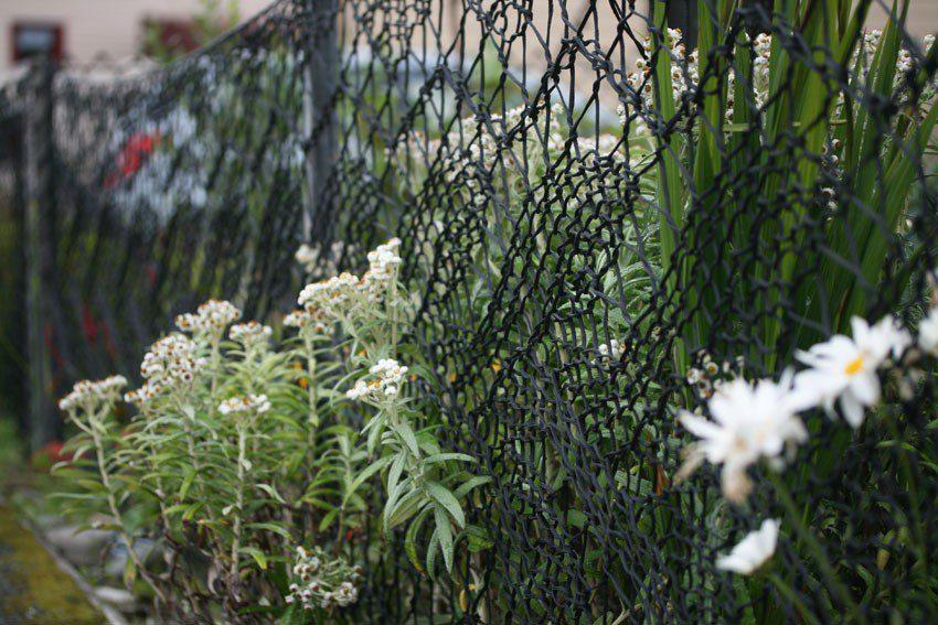 Огорожа з візерунком із мережива – справжня окраса садиби Енн Енсон