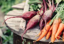 Озимий посів буряку і моркви у листопаді 2020: дати посадки, рекомендовані сорти і температурні показники