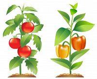 В чому користь підживлення дріжджами овочів