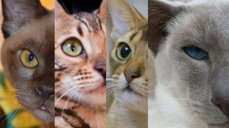 Кототерапія: які хвороби можуть лікувати котики?