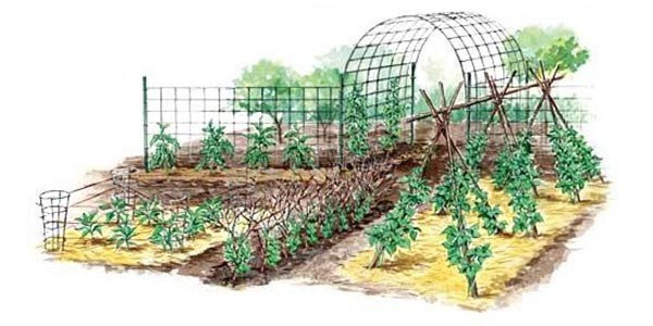 Коли треба підв'язувати рослини і які методи існують
