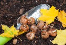 Що слід робити на городі і в саду 21, 22 і 23 жовтня 2020 радить місячний посівний календар