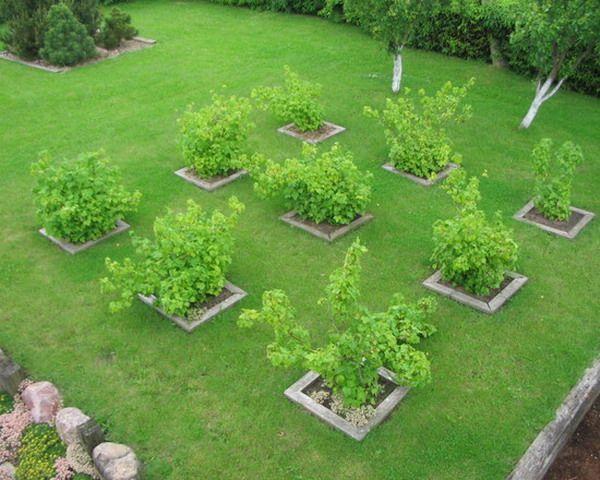 Які дерева можна висаджувати поряд, таблиця сумісності рослин в саду