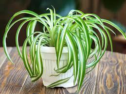 Чотири кімнатні рослини, які варто мати в домівці