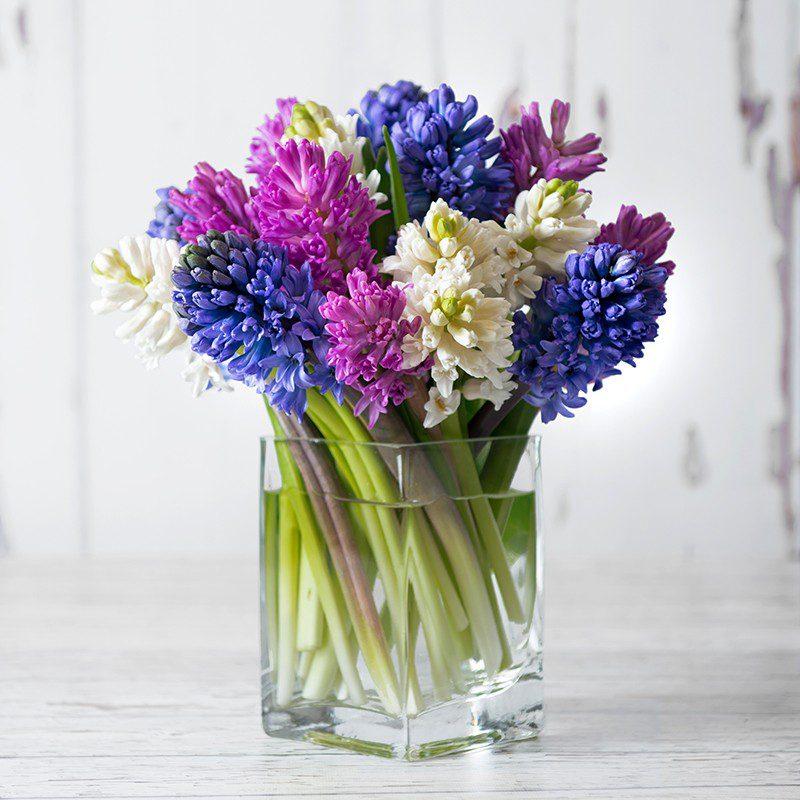 Як правильно ставити гіацинт у вазу, щоб квіти довше не в'яли
