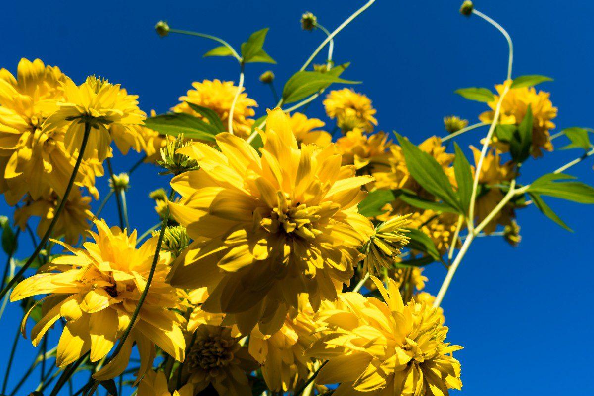 Сприятливі дні, коли сіяти і садити квіти на присадибній ділянці радить місячний посівний календар