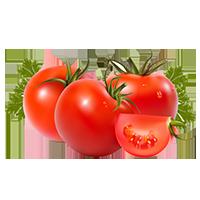 Сприятливі дні посадки помідорів у червні 2021 і догляд за ними