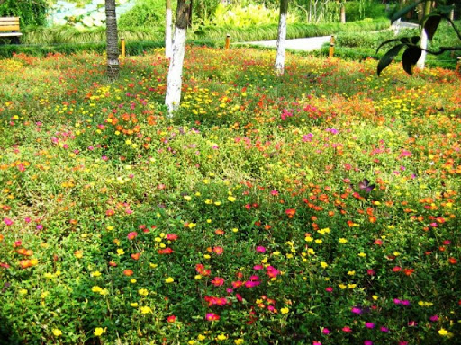 Як правильно посадити газонну траву: мавританський газон
