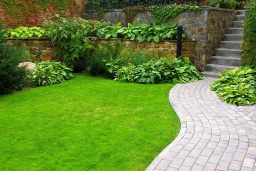 Як отримати хороший газон - запорука якісне насіння