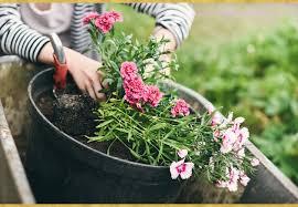 Осіння посадка і пересадка багатолітніх квітів: назви квітів, фото і рекомендації щодо строків