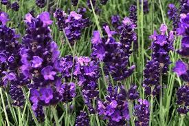 Квіти на могилу: фото і опис