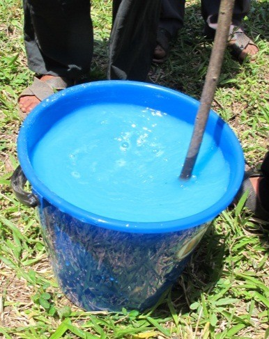 Осіння профілактика і обробка смородини