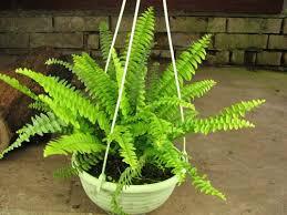 Кімнатні рослини, які люблять тінь