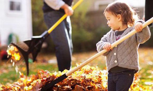 Чим обприскувати восени плодові дерева та як їх готувати до зими