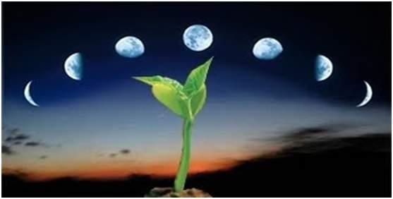 Місячний посівний календар на червень 2020 року: роботи на кожен день місяця