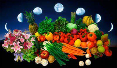 Місячний календар городника на серпень 2020 року: дати, коли збирати урожай і що садити