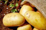 Місячний календар вказав сприятливі дні, коли копати картоплю у вересні 2021