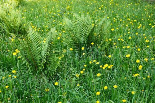Як правильно посадити газонну траву, щоб отримати хороший газон: вибор насіння і як підготувати грунт