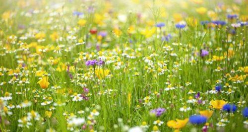 Корисні поради, як правильно посадити газонну траву, щоб отримати хороший газон