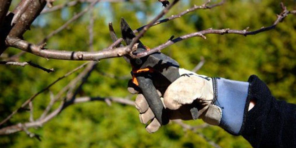 Коли обрізати дерева у квітні 2020 року: сприятливі і несприятливі дні