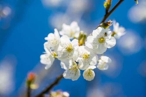Сприятливі дні в другий місяць весни, які роботи на городі, в саду і у квітнику