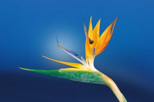 сприятливі дні коли садити і пересаджувати квіти з 1 по 11 вересня