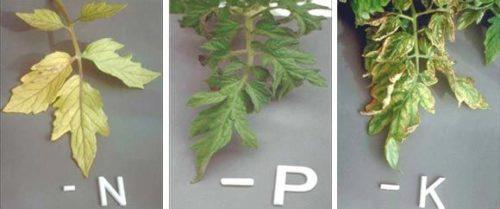 Добрива для підживлення овочів, на які вказують візуальні ознаки нестачі речовин