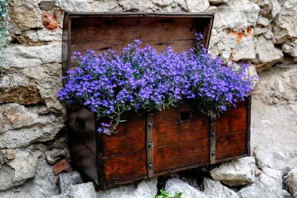 Однорічні квіти для клумби, які цвітуть все літо