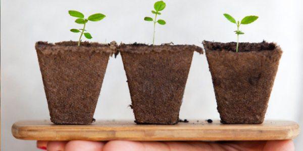 Коли у січні 2021 сіяти розсаду овочів