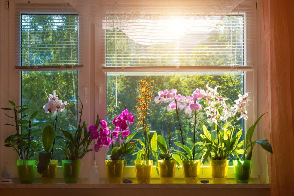 Коли влітку поливати домашні рослини і які правила поливу квітів