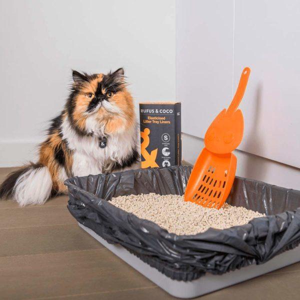 Розповсюджені помилки при догляді за котиком