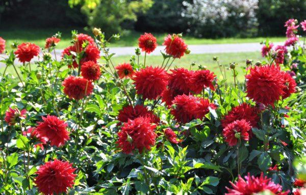 Висівання квітів розсадним способом березень і квітень 2021 і подальша висадка на клумби