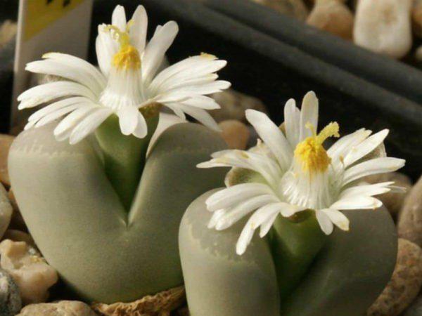 Унікальні і незвичайні кімнатні рослини, які стануть справжньою окрасою домівки