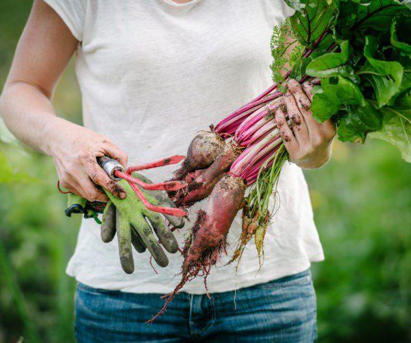 Місячний посівний календар на жовтень 2020: що робити на городі і в саду