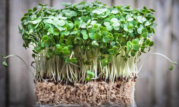 Що можна садити у вересні на грядках