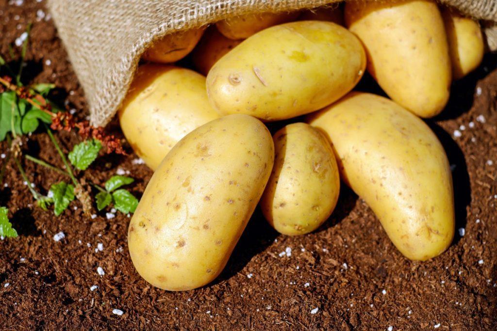 Коли копати картоплю в серпні 2021 за місячним календарем, сприятливі дні