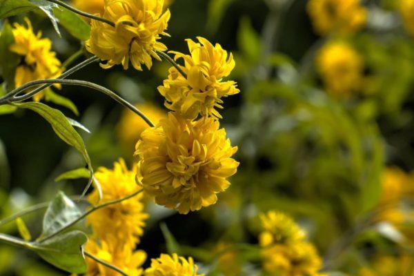 Багаторічні рослини, як висаджувати і умови вирощування