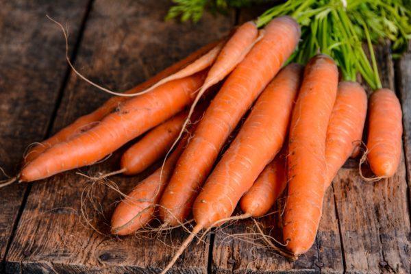 Озимий посів буряку і моркви: дати посадки, рекомендовані сорти і температурні показники
