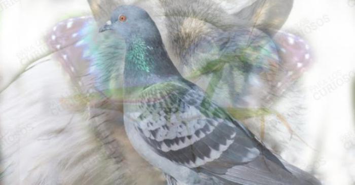 Психологічний тест з картиною тварини для самопізнання