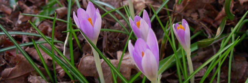 Вірші для мами і бабусі напередодні весни