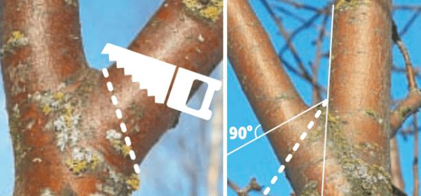 Обрізка дерев: правила і рекомендації