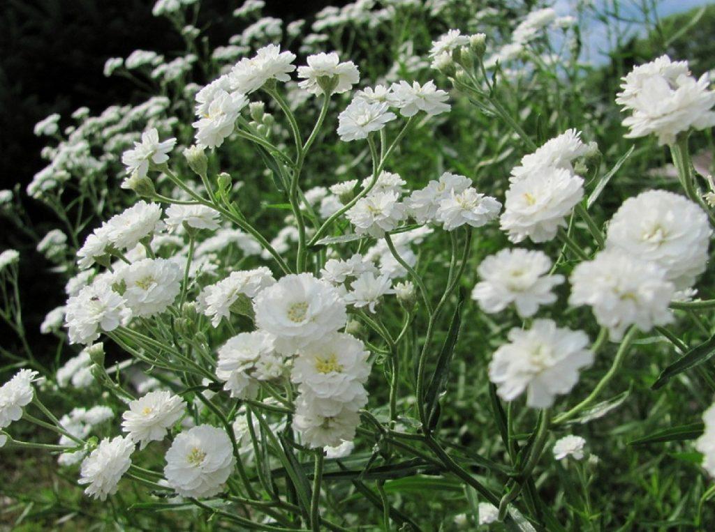 Квіти для цвинтаря, щоб прикрасити могилу