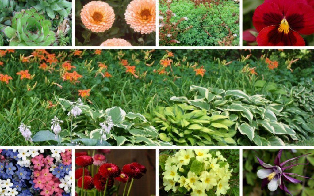 Види квітів, які можна посадити на могилу