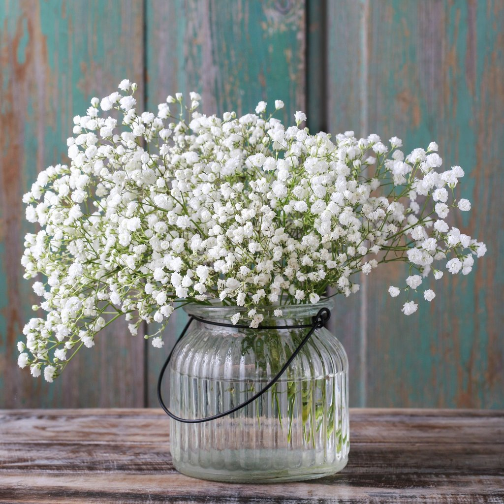 Квіти для піщаних грунтів