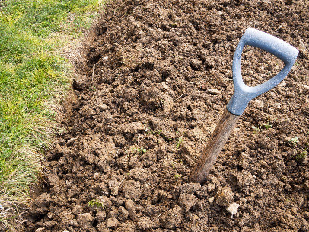 Підходящі рослини для глинистого грунту